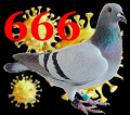Initiation au complotisme satanique : corona vs pigeon