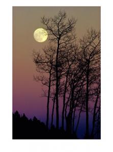La lune blanche luit dans les bois