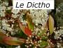 Dictho